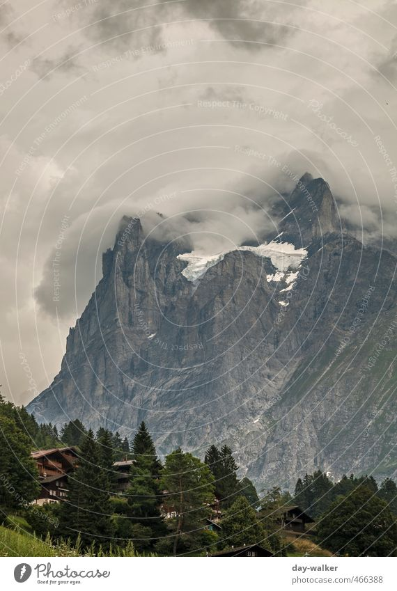 Wetterhorn - how true! Nature Plant Elements Clouds Storm clouds Summer Bad weather Thunder and lightning Tree Flower Grass Alps Mountain Peak Snowcapped peak