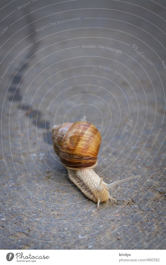 Beautiful Animal Street Movement Authentic Speed Target Tracks Serene Positive Snail Crawl Endurance Patient Resolve Snail shell