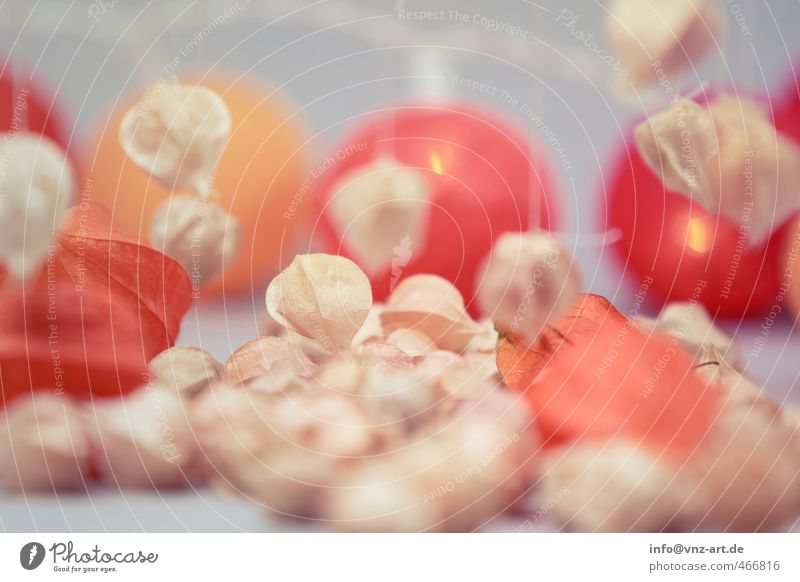 Autumn Food Fruit Nutrition Organic produce Vegetarian diet Plant Orange Red Autumnal Physalis Hover String Colour photo Interior shot Deserted Artificial light