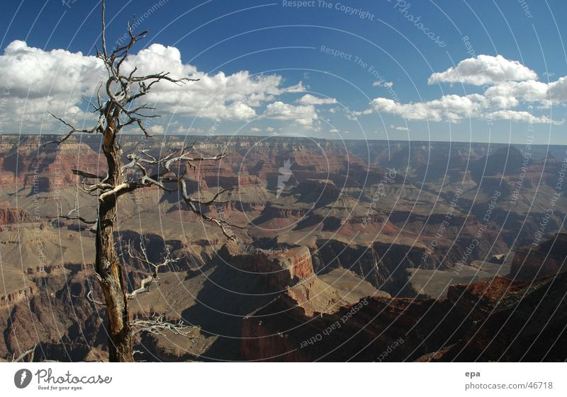 Tree Vacation & Travel Far-off places Freedom Landscape USA Canyon National Park Nevada Grand Canyon