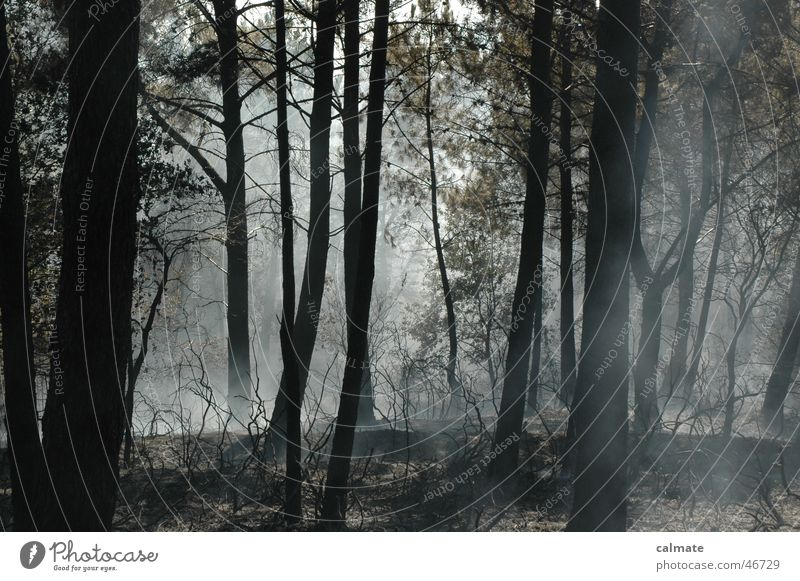 Nature Tree Blaze Smoke Glow Forest fire