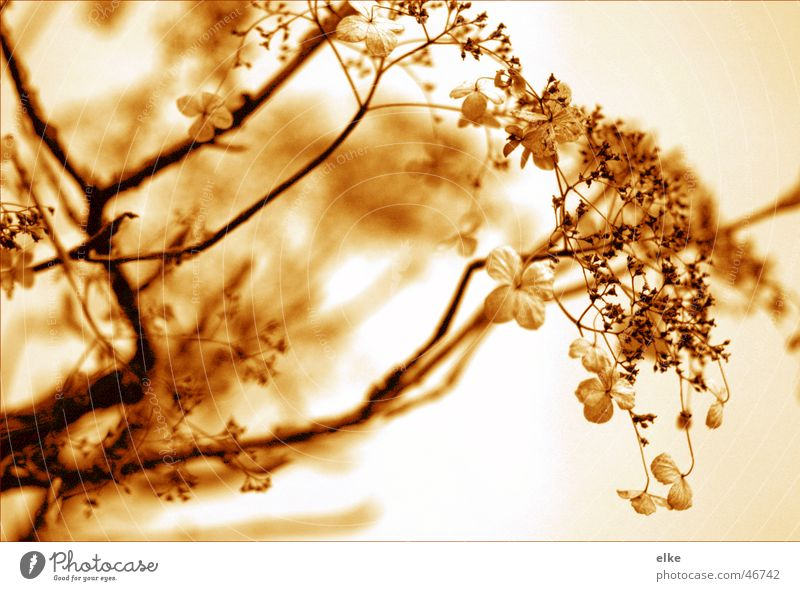 Nature Flower Plant Autumn Blossom Botany Creeper Hydrangea