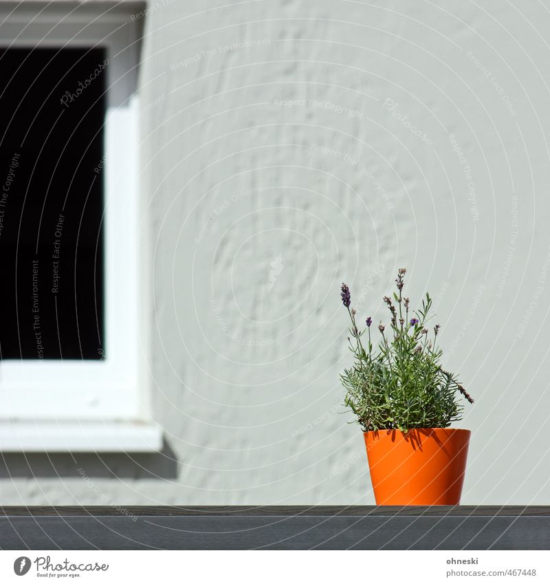 Plant Window Orange Facade Decoration Flowerpot Lavender