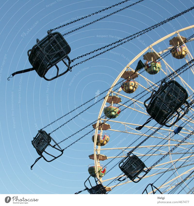 Fun society's going around. Leisure and hobbies Carousel Chairoplane Ferris wheel Adventure Summer Oktoberfest Fairs & Carnivals Movement Rotate Driving Hang