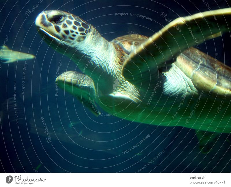 Nature Water Ocean Animal Swimming & Bathing Dive Biology Environmental protection Turtle Armor-plated Glide