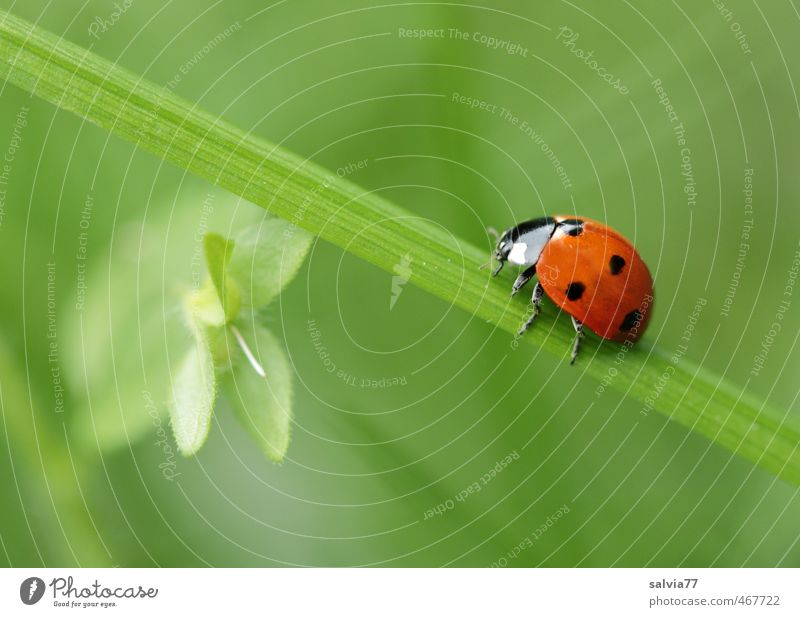 go green Environment Nature Plant Animal Spring Summer Grass Leaf Meadow Wild animal Beetle 1 Crawl Green Red Happy Calm Colour Mobility Past Lanes & trails