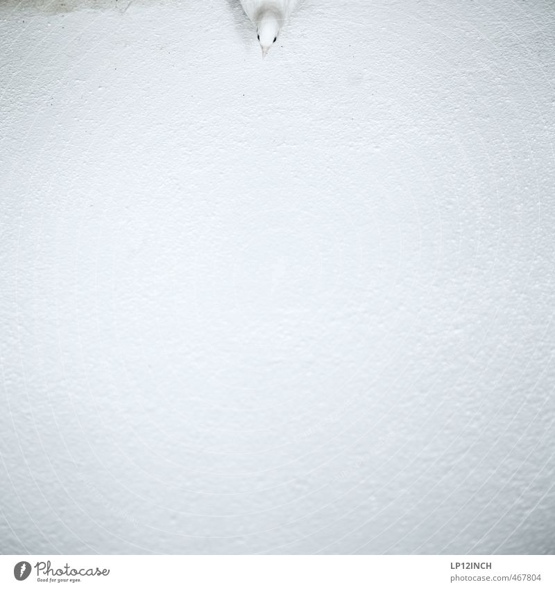 White Animal Wall (building) Baby animal Small Bird Ground Drop by