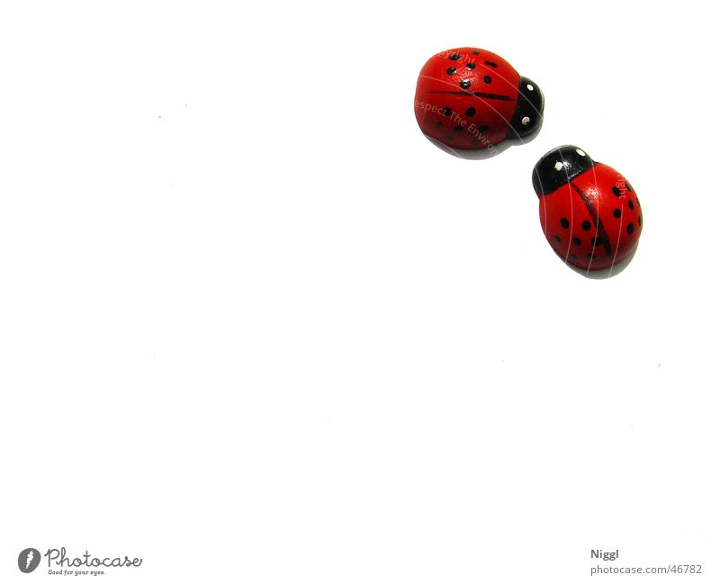 White Red Black Wood Pair of animals In pairs Point Ladybird Wooden figure