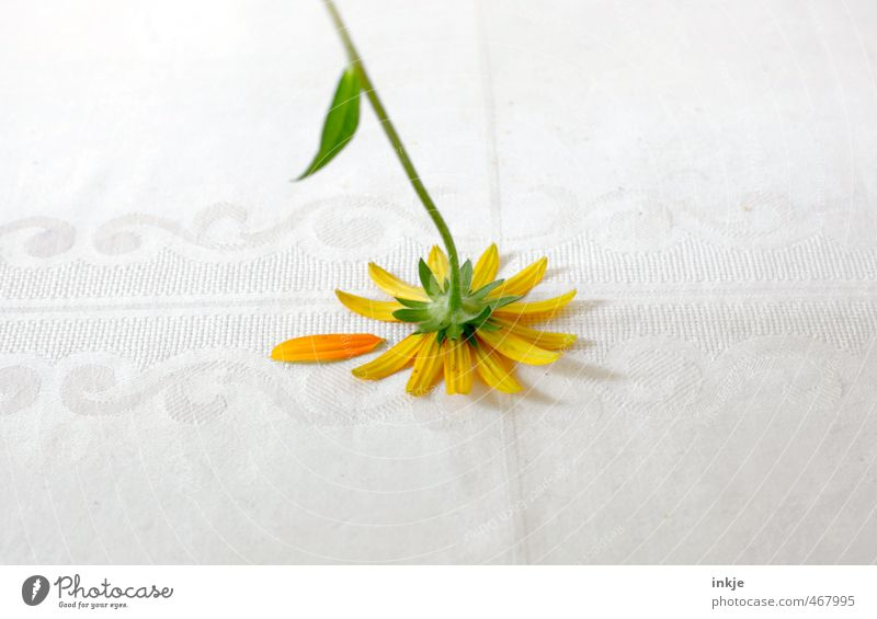 CONCLUSION WITH FUNNY Style Decoration Summer Flower Blossom Marguerite Blossom leave Tablecloth Lie Sadness Faded Broken Gloomy Under Yellow Green White