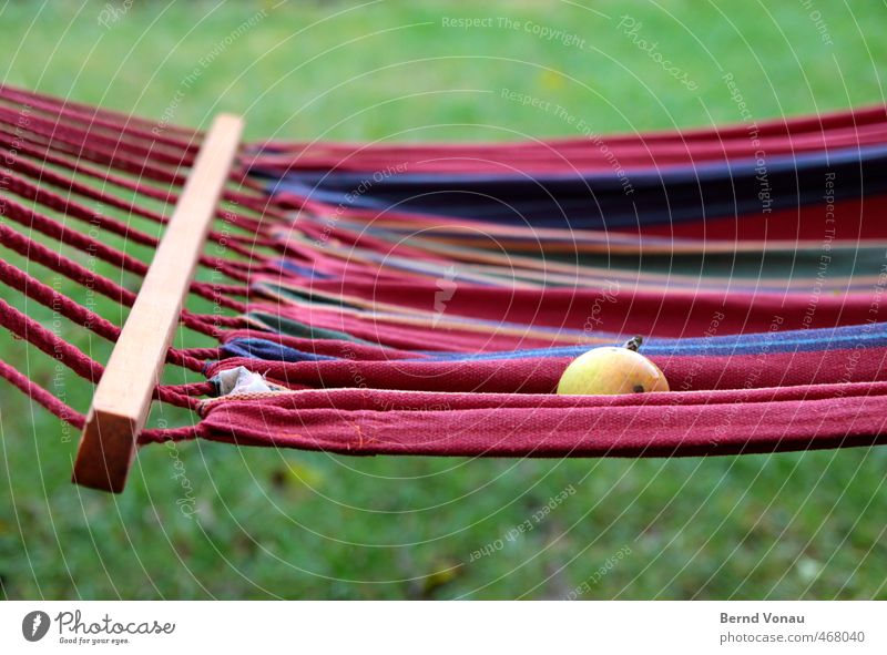 Hanging and falling Leisure and hobbies Garden Autumn Apple Blue Brown Green Red White Hammock Harvest Dreary Bad weather Fallen Fruit Windfall Autumnal Wet