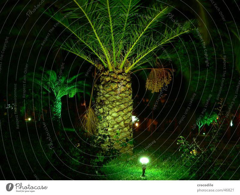 palm Palm tree Green Night Dark Vacation & Travel Greece Kos Black Light Lighting Floodlight