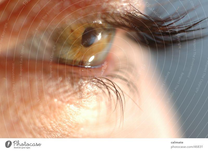 Eyes Eyelash Eyebrow Pupil Iris