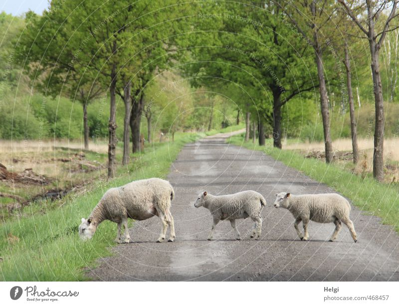 Nature Green Plant Tree Landscape Animal Environment Baby animal Street Movement Grass Spring Gray Natural Going Brown