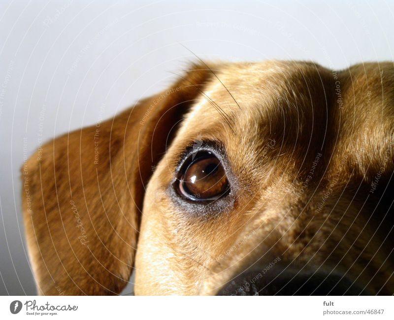 Eyes Animal Style Hair and hairstyles Dog Brown Ear Pelt Pet