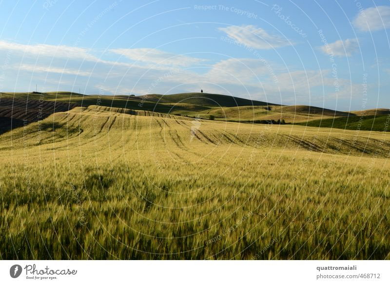 Cereal field in Tuscany Vacation & Travel Far-off places Freedom Summer Environment Nature Landscape Horizon Beautiful weather Grain Field Hill Blue Yellow Gold