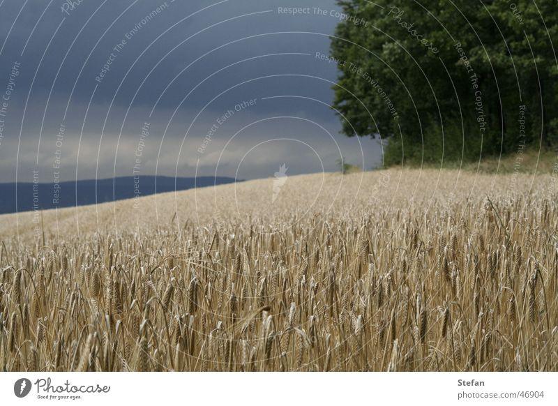 Sky Tree Dark Field Switzerland Grain Barley