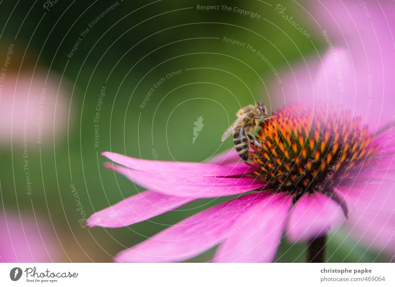 Of bees and flowers Environment Nature Plant Blossom Foliage plant Bee 1 Animal Blossoming Flying Crawl Insect Propagation Sprinkle Colour photo Exterior shot