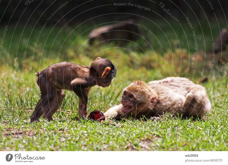 Animal Baby animal Lie Pair of animals Curiosity Zoo Aggression Envy