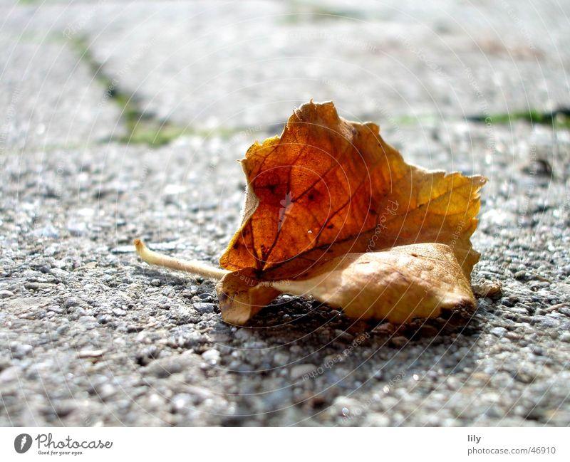 autumn Leaf Autumn Brown Gray Stone