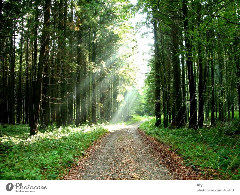Fairy tale forest #2 Autumn Sunbeam Forest Tree Footpath Loneliness Leaf autumn sun Lanes & trails
