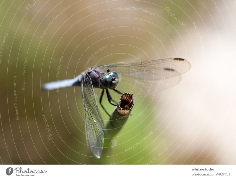 Takeoff in 3,2,1 ... Dragonfly Sit Eyes Insect Dragonfly wings Ready Airplane takeoff Airplane landing Fly Flying Floating Rest Break Pond Clever Dangerous