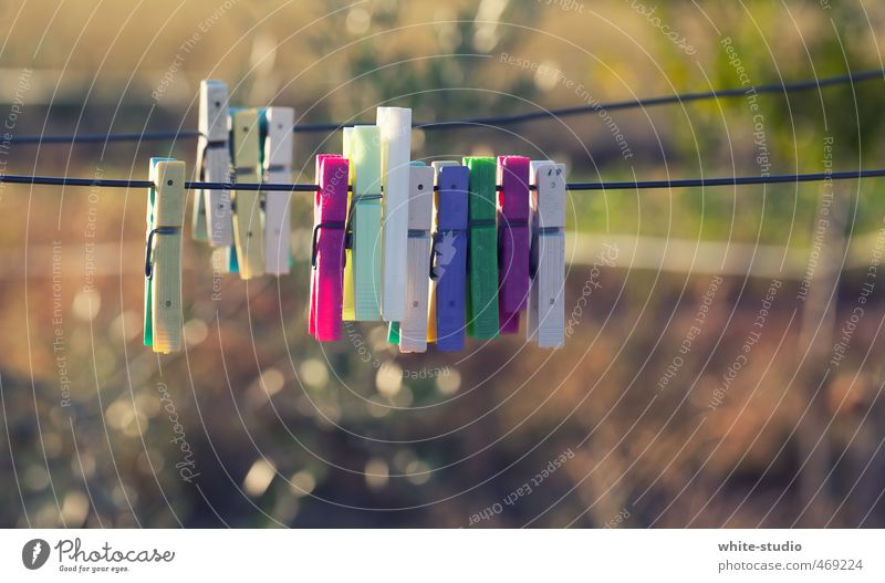 herd formation Accessory Relaxation Clothes peg Clothing Dry Friendship Clique Hang up Tumble dryer Clothesline Laundry Washing Cotheshorse Exterior shot Summer