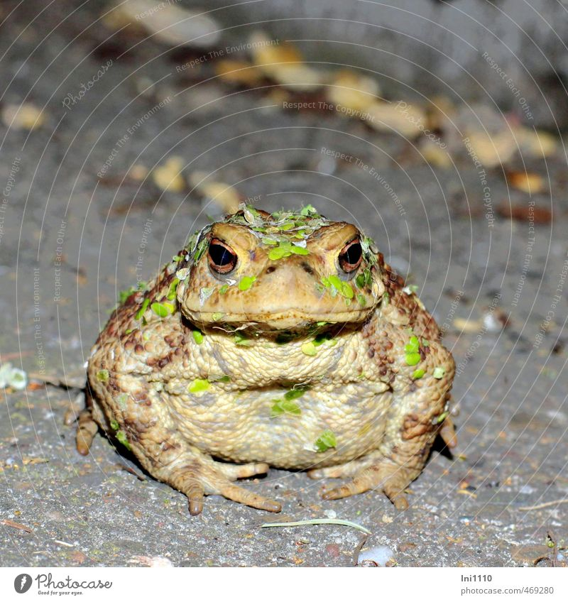 Toad with duckweed Nature Animal Water Summer Beautiful weather Warmth Plant Foliage plant Wild plant Water lentil Garden Pond Lake Wild animal Animal face