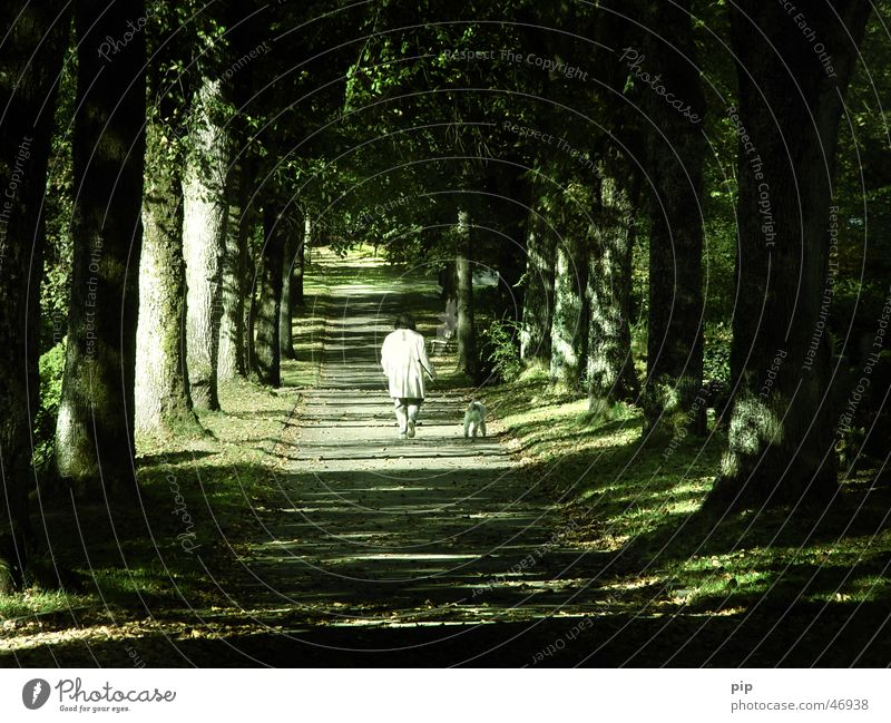 Woman Human being Tree Leaf Loneliness Dark Graffiti Lanes & trails Dog Sadness Think Park Bright Going Rope Grief