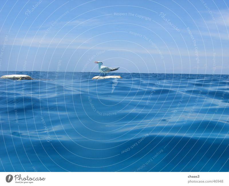 Water Sky Ocean Blue Waves Seagull Buoy