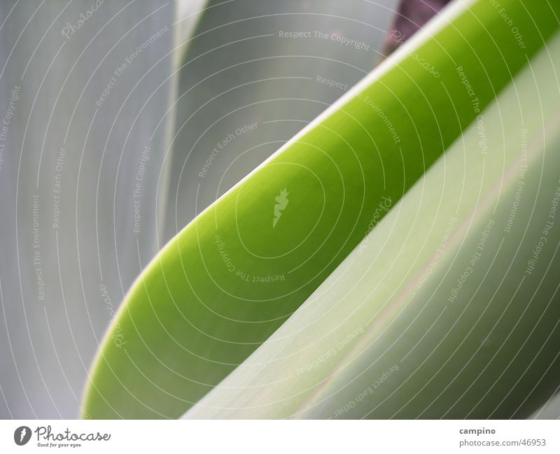 Shades of green Agave Background picture Green Plant Nature Detail