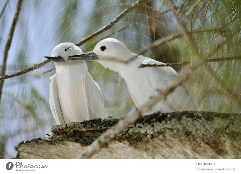Nature Blue Green White Summer Animal Forest Love Emotions Happy Brown Bird Together Idyll Pair of animals Wild animal