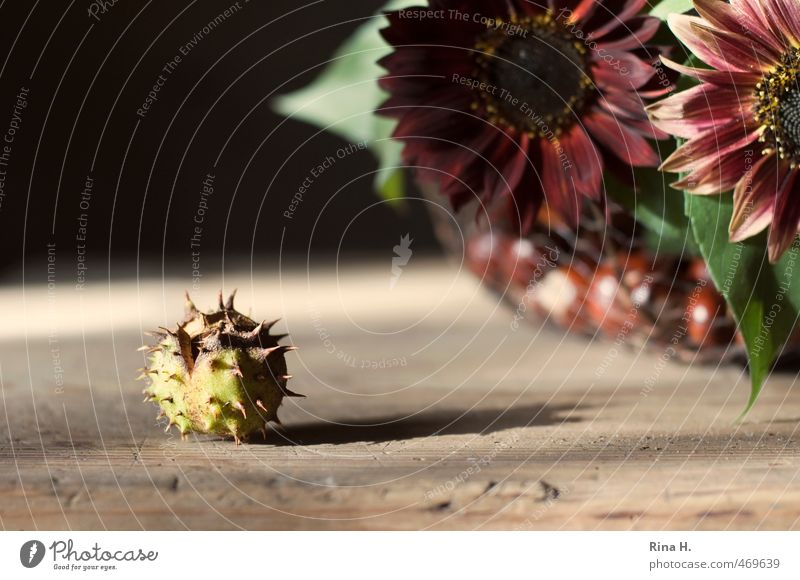 Autumn Still IV Living or residing Decoration Flower Sunflower Bouquet Red Change Chestnut Wooden table Autumnal Still Life Individual Loneliness Thorny