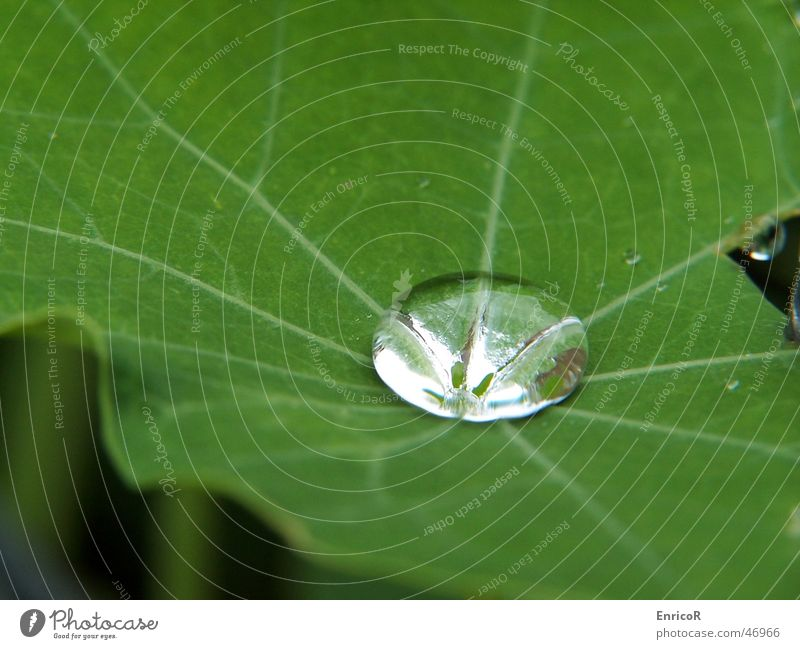 Nature Water Plant Leaf Rain Drops of water Foliage plant