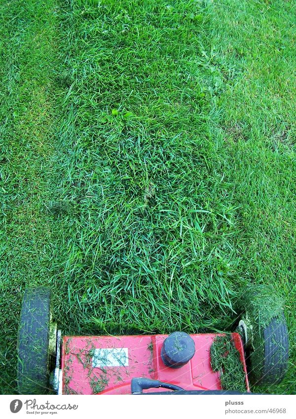 lawn mowing Work and employment Machinery Grass Meadow Line Stripe Green Lawnmower Cut Blade of grass Tracks Mow the lawn Wheel Skid marks Gardening