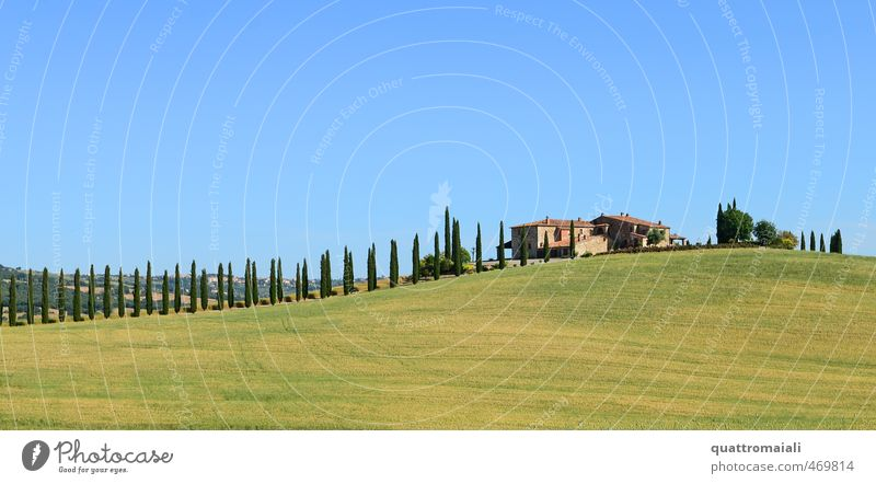 The classic in Tuscany Vacation & Travel Summer Sun Dream house Landscape Cloudless sky Beautiful weather Cypress Hill Italy Europe