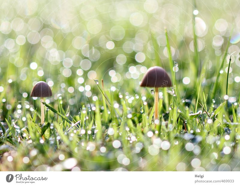 Nature Green White Plant Environment Autumn Grass Small Natural Exceptional Garden Moody Brown Glittering Stand Growth