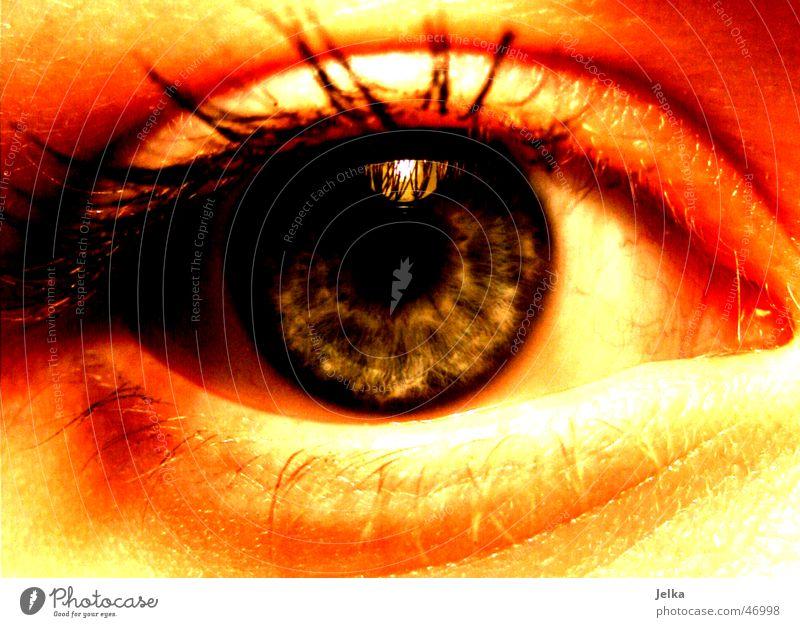 I Woman Adults Eyes Blue Eyelash Pupil eye lashes eyelashes ciliary Iris Colour photo