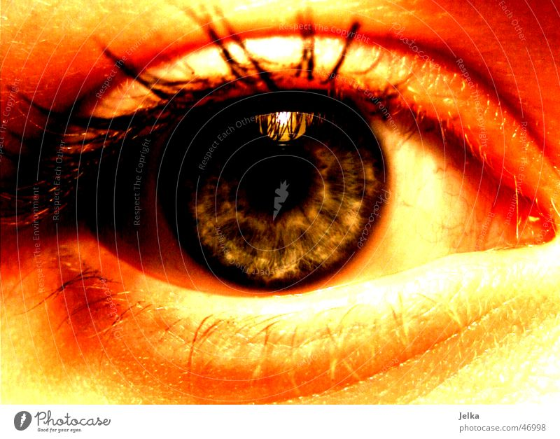 Woman Blue Adults Eyes Eyelash Pupil Iris