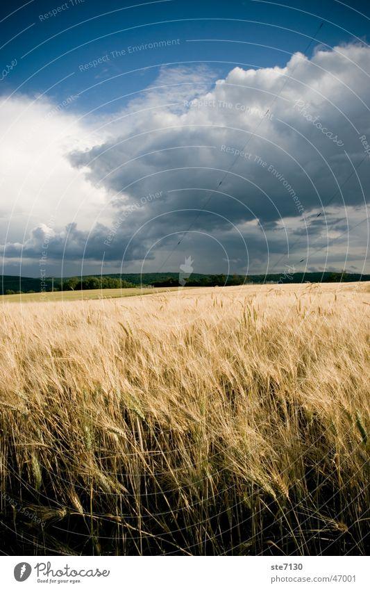 Nature Sky Blue Clouds Moody Field Germany Wind Europe Blue sky Grain Wheat Mühlacker