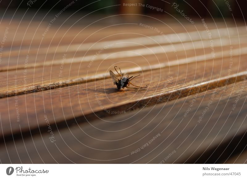 What a mess! for does no morerrr! Animal Summer Autumn Table Teak Meadow Fly nikon d50 fab´