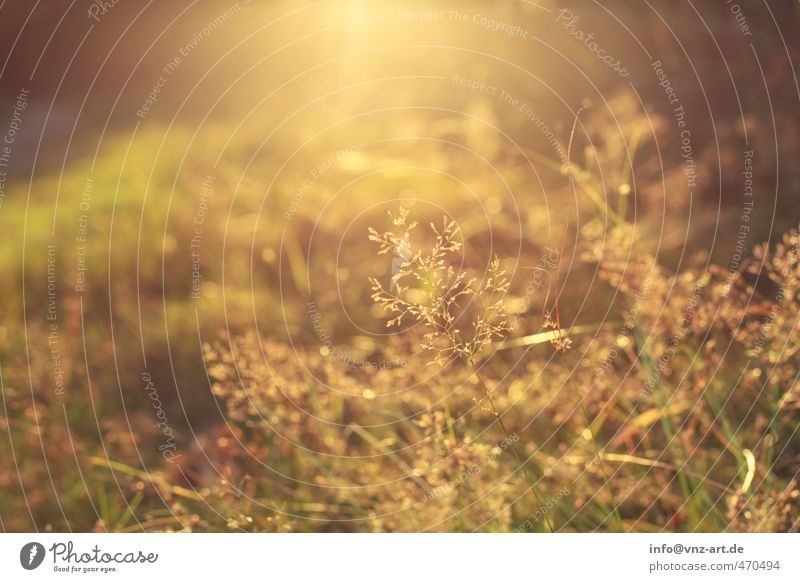 Nature Plant Sun Yellow Environment Meadow Emotions Autumn Grass Garden Moody Weather Park Gold Bushes Beautiful weather
