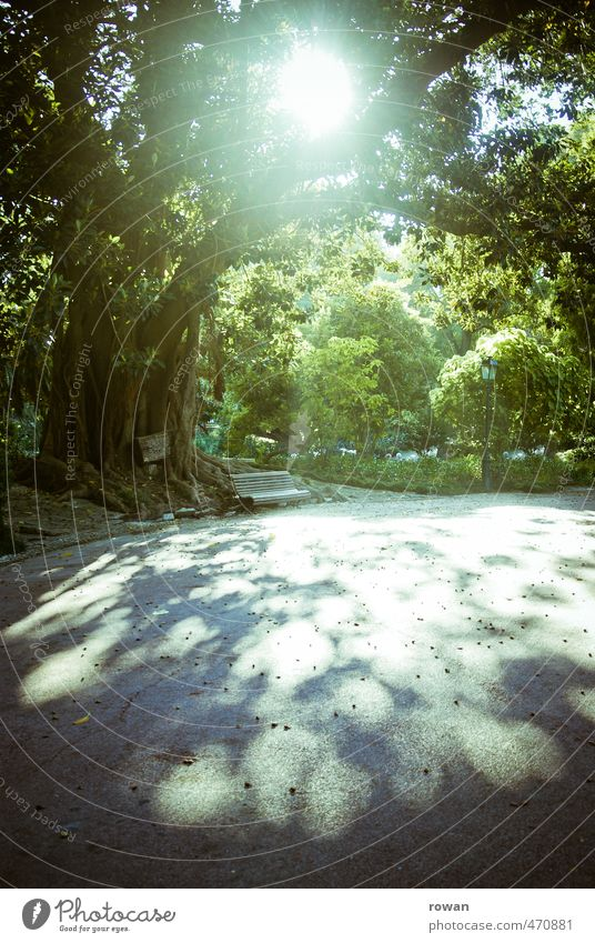 shadow cast Nature Sun Sunlight Summer Tree Leaf Garden Park Warmth Relaxation Bench Old Large Leaf canopy Idyll Calm Break Colour photo Exterior shot Deserted