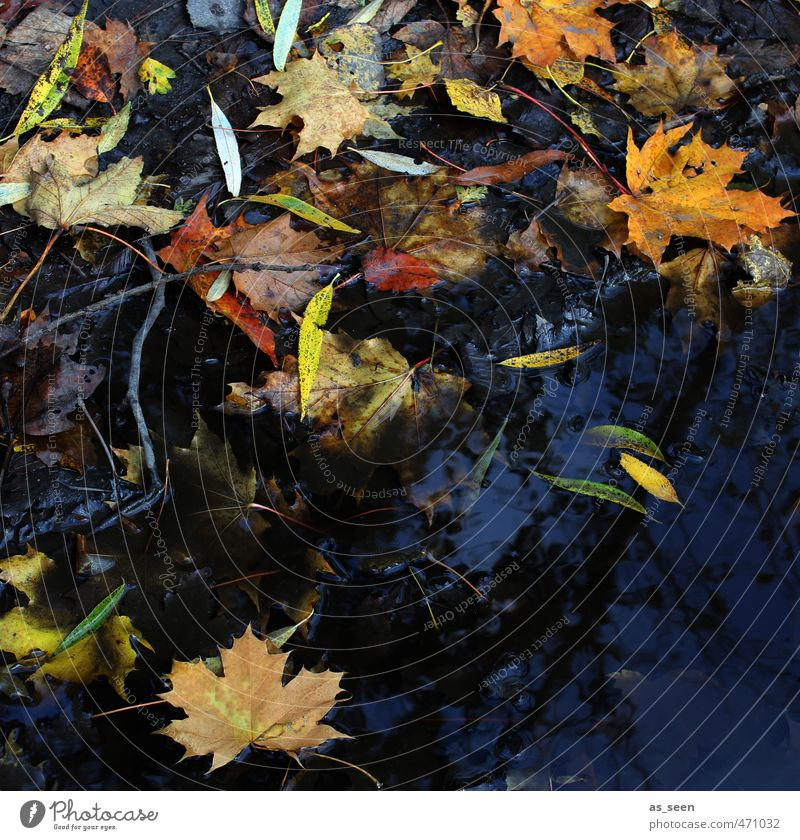 Nature Old Green Water White Plant Colour Red Black Yellow Autumn Wood Natural Brown Orange Dirty