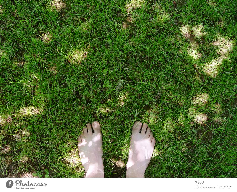 barefoot Meadow Green Toes Summer Lawn Parts of body Feet Shadow Human being niggl Barefoot