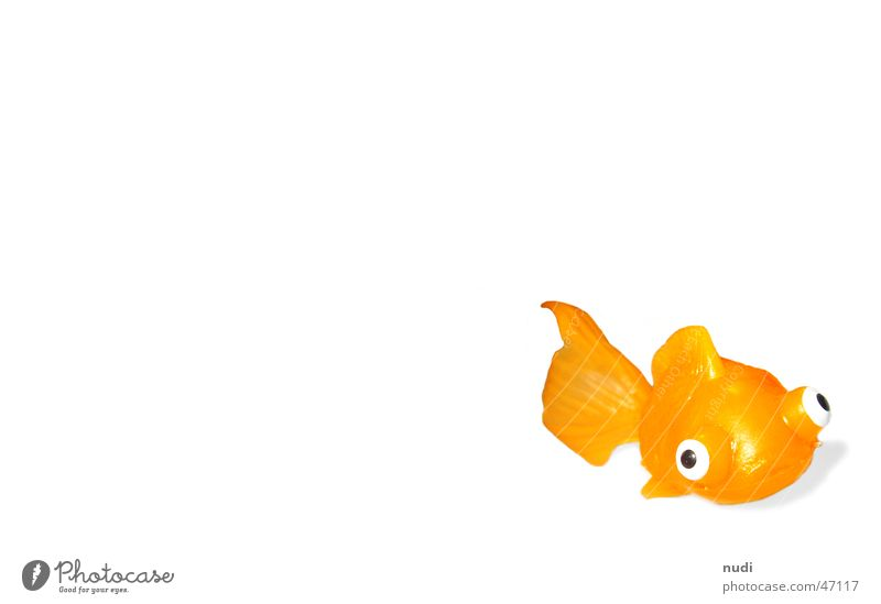 Water Eyes Animal Orange Fish Toys Statue Water wings Goldfish