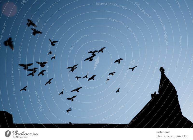flying high Trip City trip Sky Cloudless sky Church Manmade structures Building Architecture Roof Animal Wild animal Bird Pigeon Flock Flying Dark Longing
