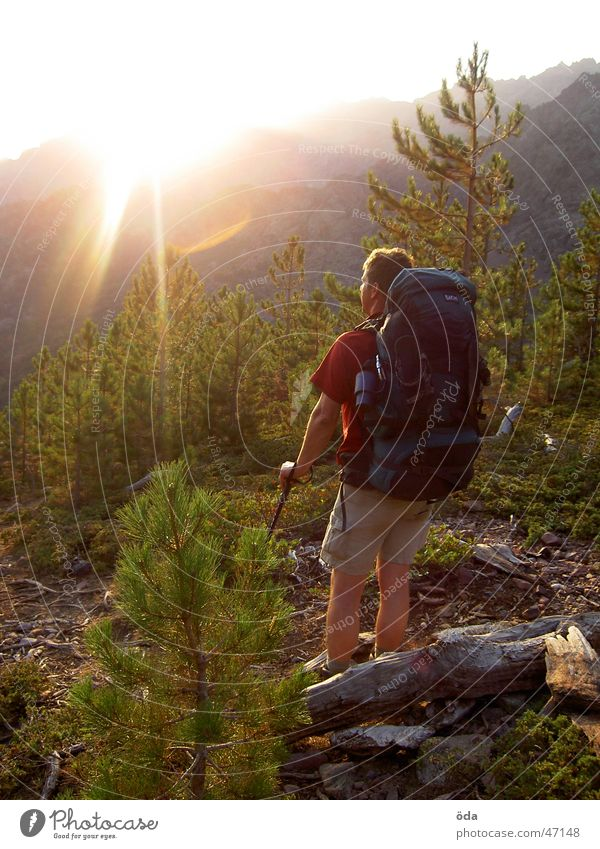Man Tree Sun Hiking Break Vantage point To enjoy Carrying France Backpack Corsica