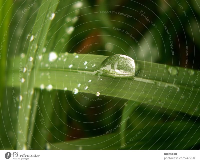 Water Meadow Grass Drops of water Wet Rope Lawn Blade of grass