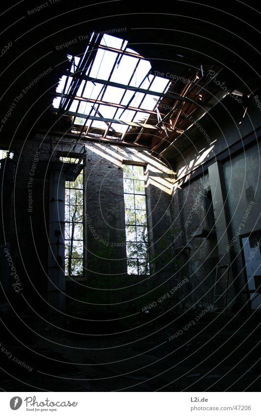 Old Tree Sun Loneliness Wall (building) Window Wood Factory Creepy Hollow Warehouse Wooden board Destruction Shaft