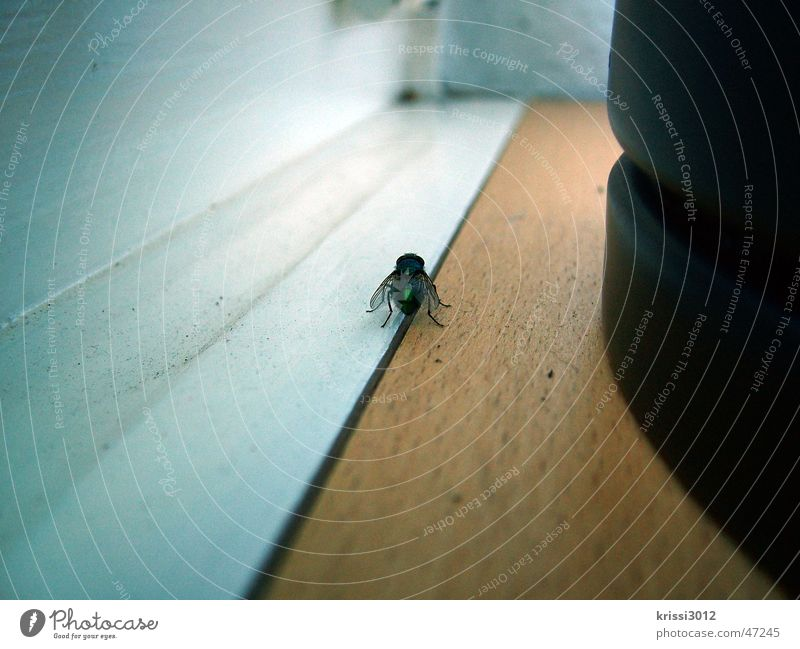White Black Dark Wood Bright Brown Earth Dirty Fly Insect Catch Escape Window board